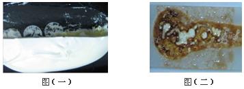 RTV 概述—新亚RTV有机硅解决方案 散热膏  散热硅脂 散热材料 高导热材料 导热膏 导热硅脂 导热材料 热传导技术 芯片散热 CPU散热 大功率LED散热 散热技术 手机散热 笔记本散热